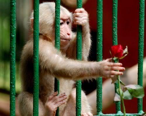 Laowaicast 48. Белые обезьянки в Китае отмечают 1 год подкастинга