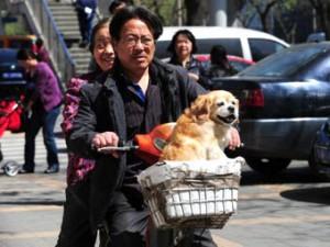 Жителям китайского города велели избавиться от собак