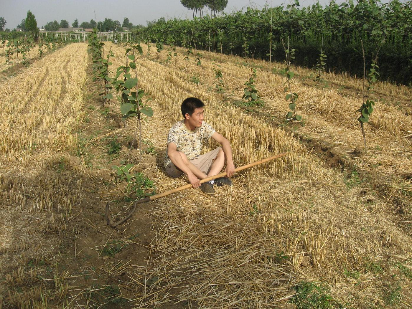 Типичный китайский крестьянский сын